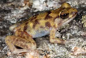 В Австралии обнаружили незнакомых животных