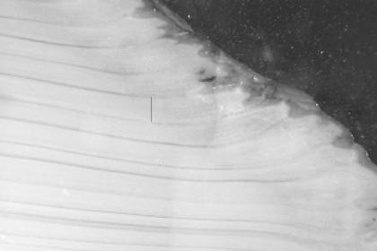 Исследователи невольно убили самого старого моллюска