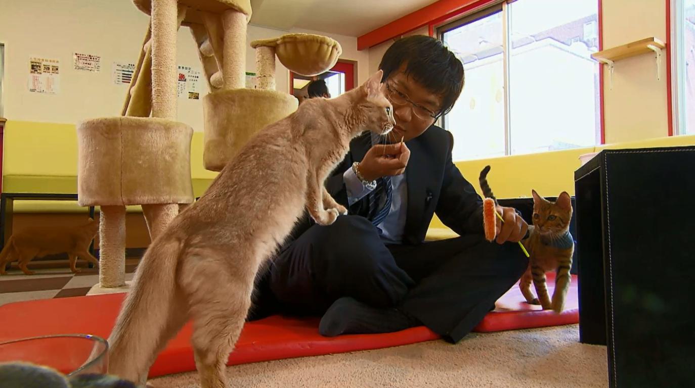 Европу обхватил расцвет на кошачьи кафе (ФОТО, ВИДЕО)