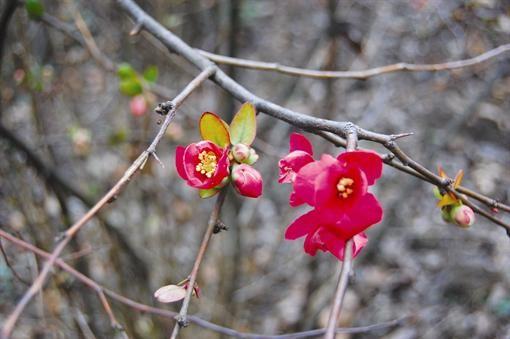 В Никитском ботсаду цветочки спутали зиму с осенью