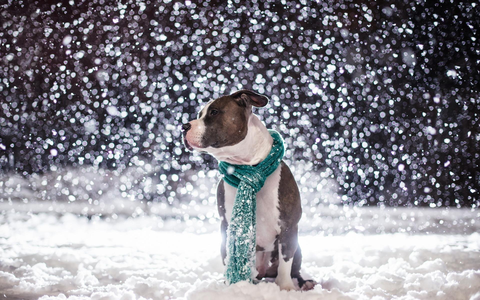 Украина готовится к холодам, вьюгам и снегам