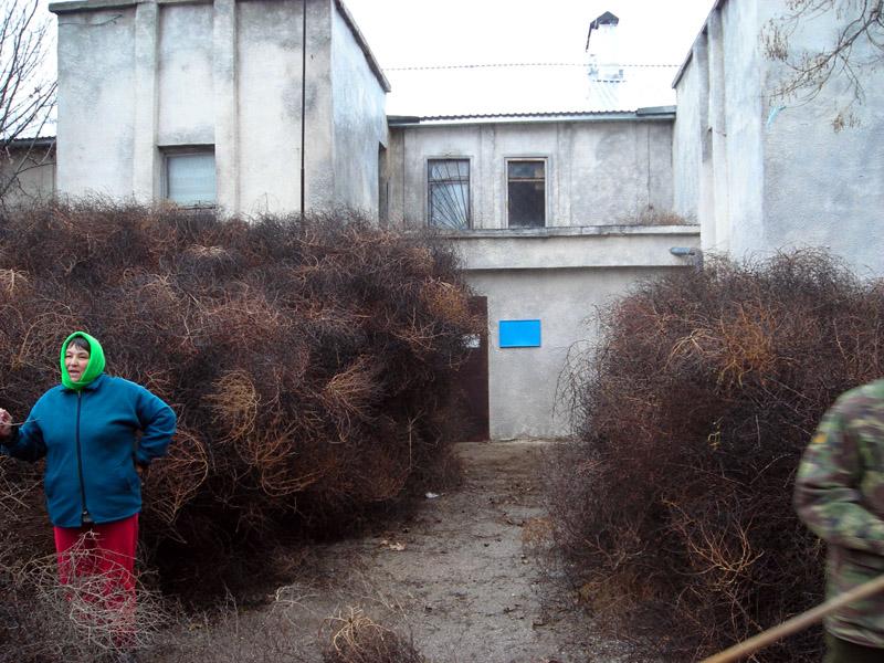 Населенный пункт Миролюбивый штурмовали растения высотой с дом (ФОТО)
