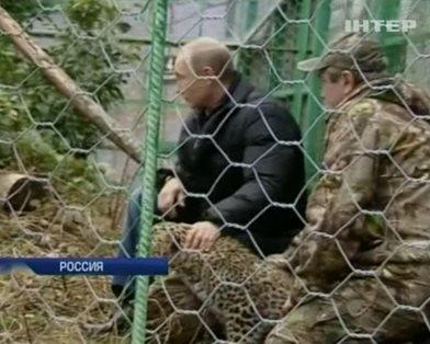 Путин поглаживал леопарда в сочинском зоопарке