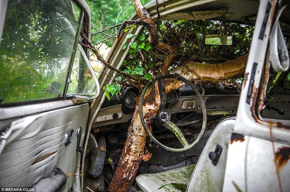 В Швеции создали кладбище автомобилей
