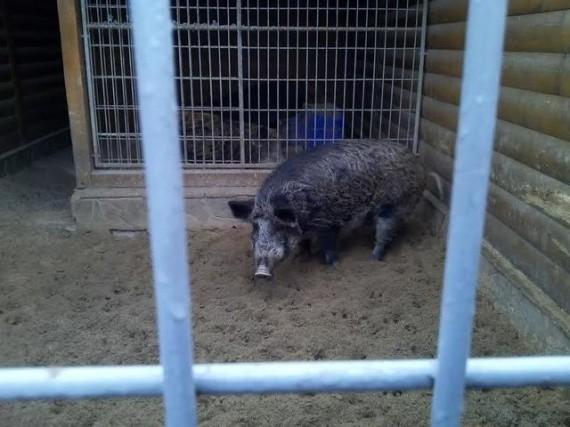 Депутаты обещают позаботиться о зоопарке Януковича