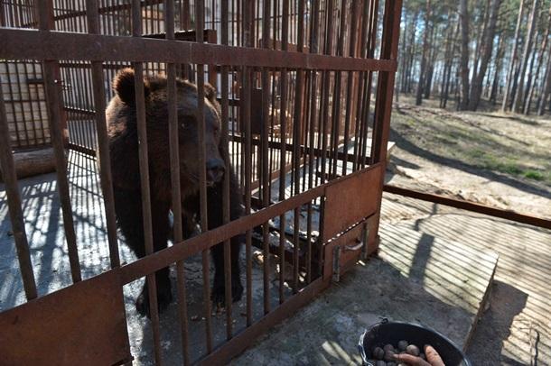 Звери Клименко: Фото тигров и медведей экс-главы Миндоходов