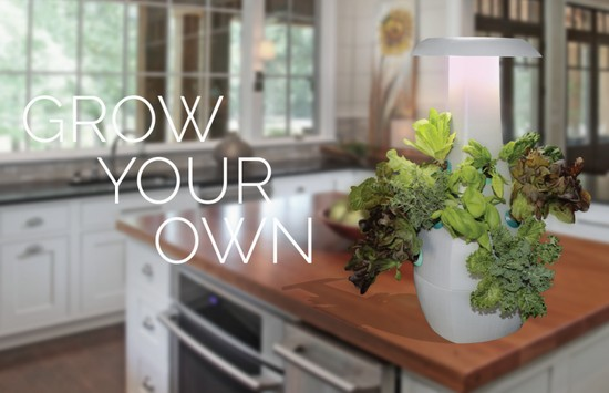 ROOT поможет вырастить любое растение в домашних условиях