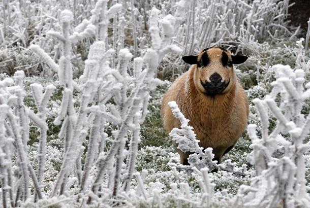 Лучшие фото 1-7 декабря 2014 года (ФОТО)