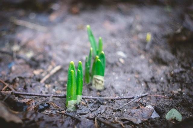 ФОТО: В Одессе потепление вызвало интенсивный рост растений