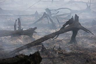 Масштабный лесной пожар в Киевской области