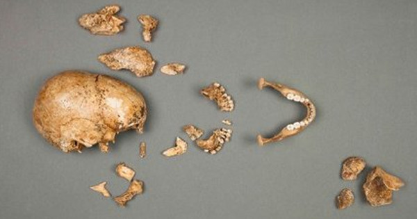 В животе 100-летней рыбы нашли остатки немецкого офицера