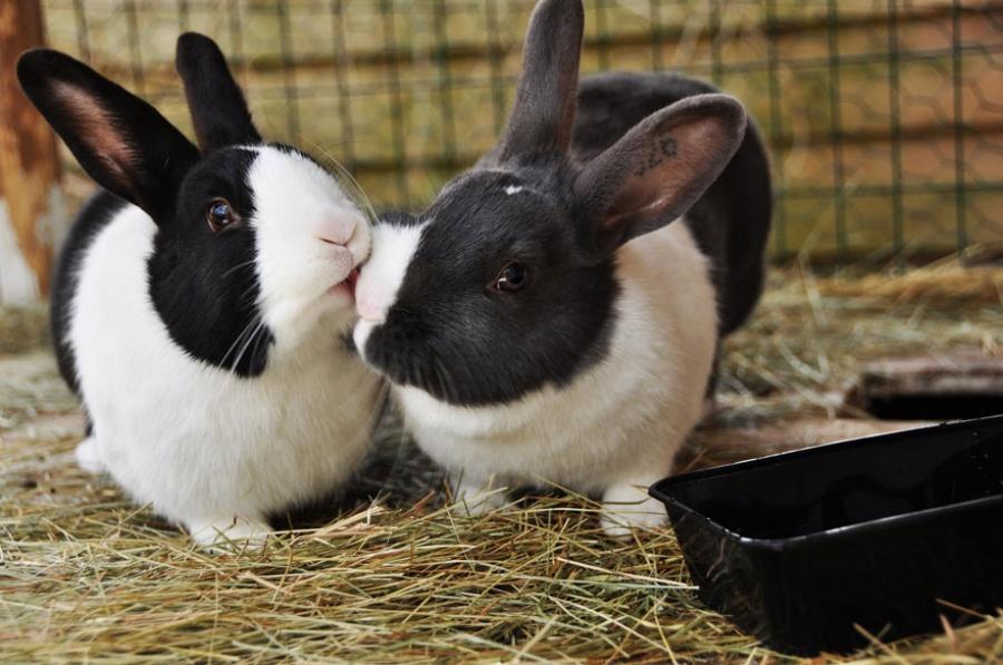 Со Всемирным днем поцелуя! (ФОТО)