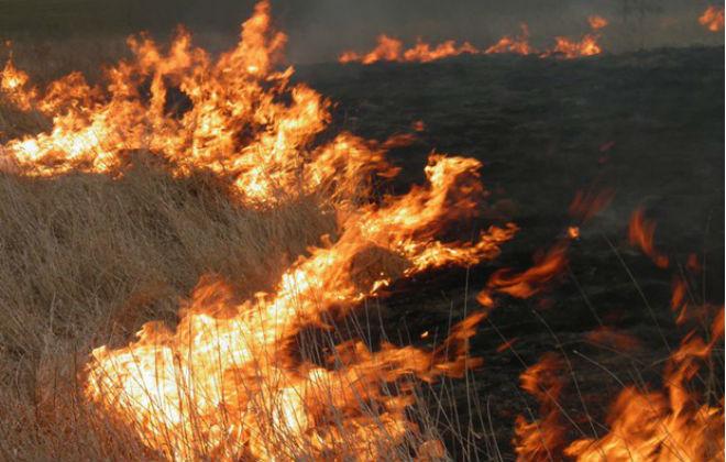 На Трухановом острове в Киеве произошел пожар (ФОТО)