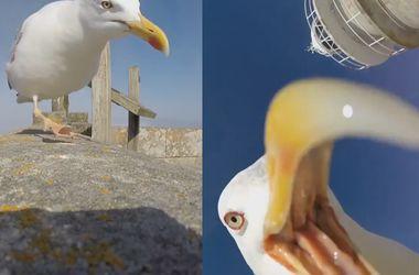 Чайка-воровка сняла уникальные виды Атлантического побережья