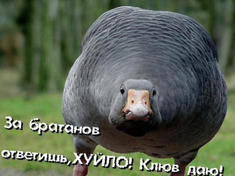 ФОТОЖАБЫ: Месть гусей Путину