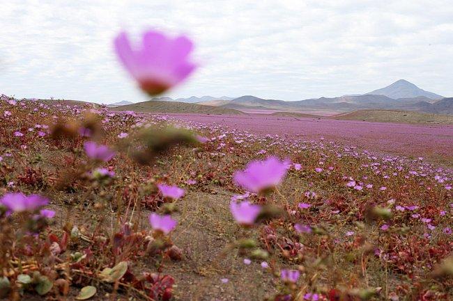 ФОТО: Чрезвычайная прелесть в самой сухой пустыне планеты