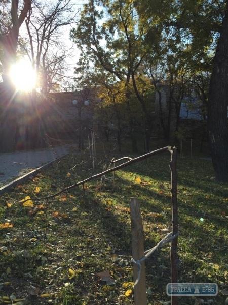 """В Одессе убили аллейку лип """"Лазурной тысячи"""" (ФОТО)"""