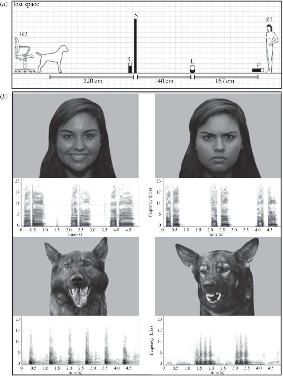 Собаки определяют настроение человека по выражению лица