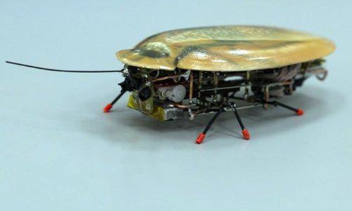 Американцы сделали робота-таракана для армии (ФОТО)