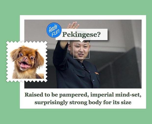 Майкрософт установил на каких собак похожи мировые руководители
