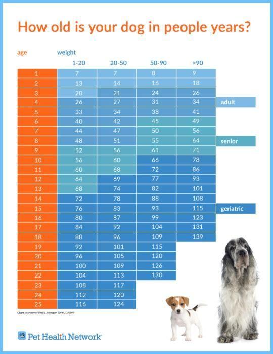 """Как узнать возраст собаки либо собаки в """"наших"""" гг.?"""