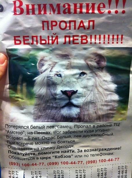 В Запорожье из цирка улизнул лев