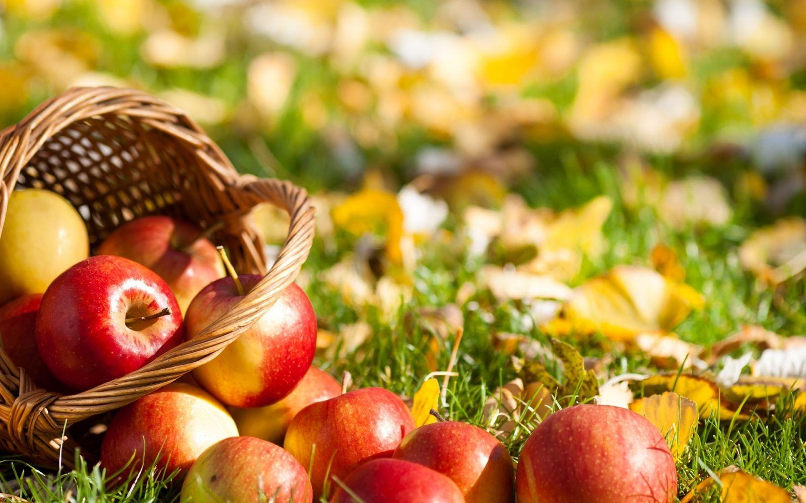 5 причин съедать по яблоку каждый день
